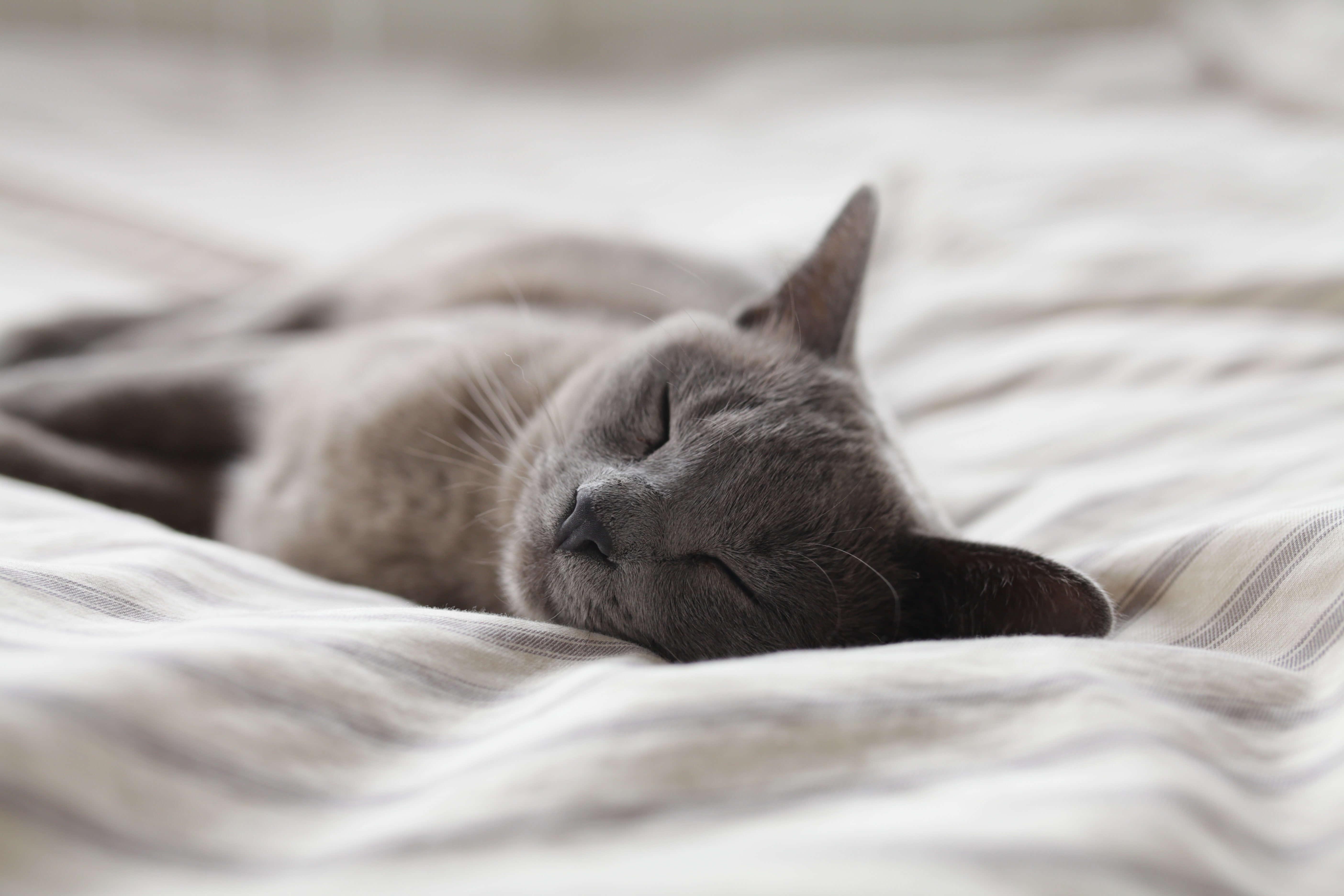 「寝過ごす」は起床時刻を過ぎること