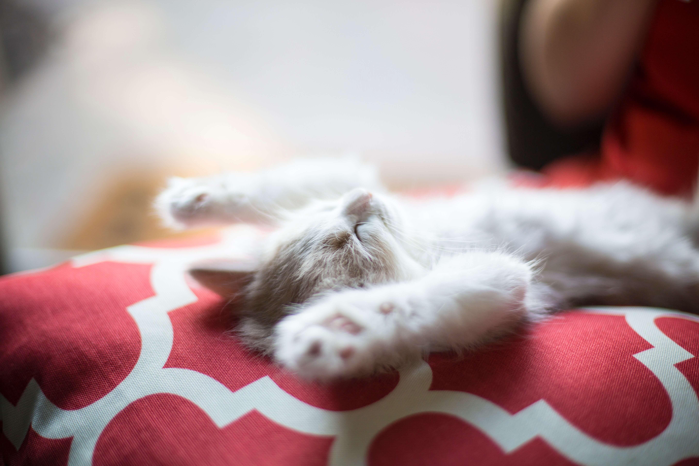 仮眠」は短時間の睡眠をとること