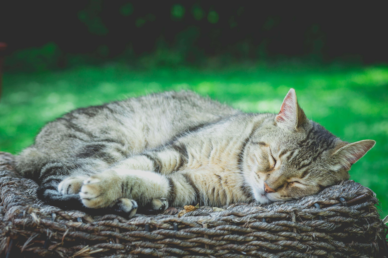 「眠る」は目を閉じて無意識になる状態