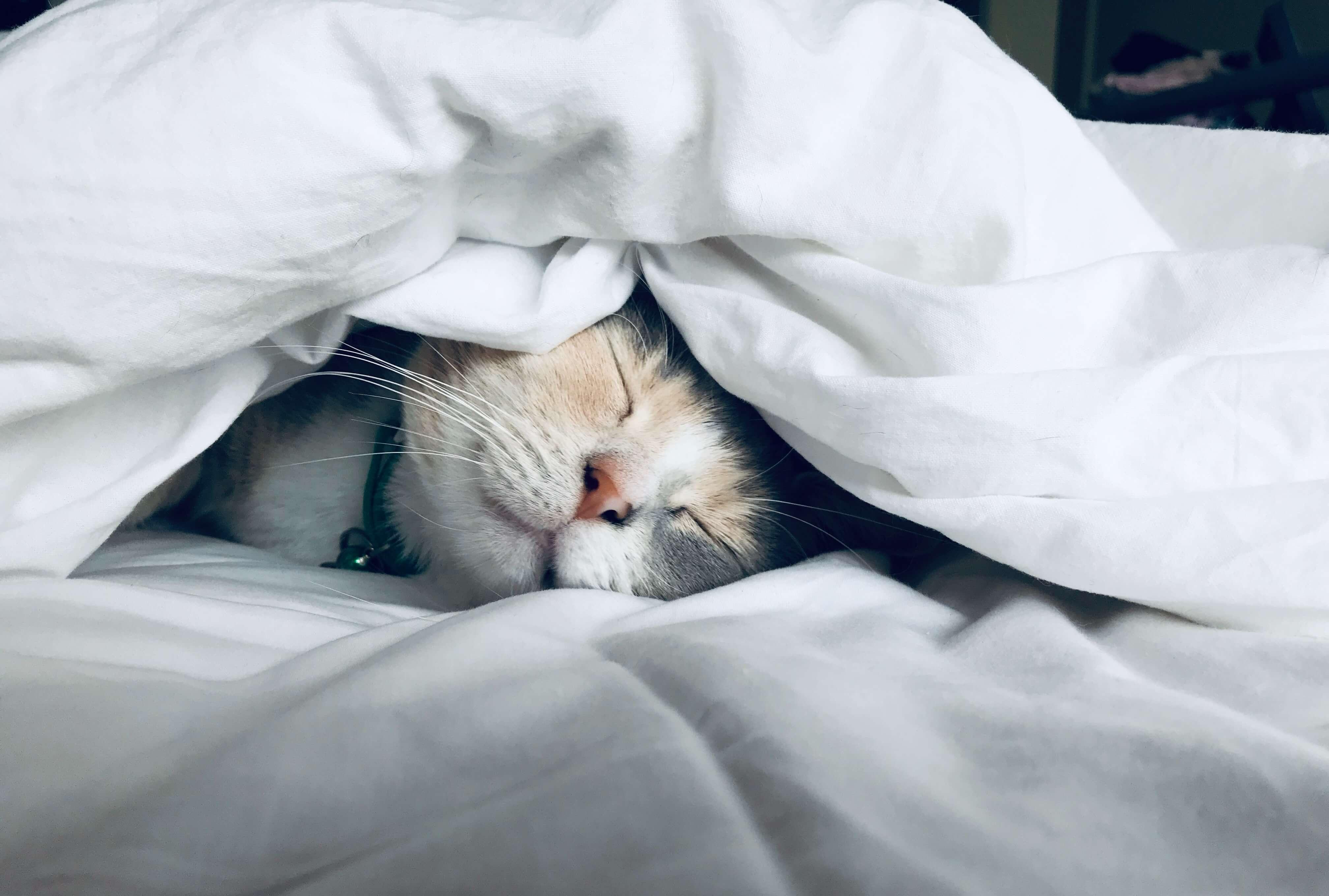 「入眠」は眠りにつくこと
